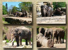 Elefanten in der Frühlingssonne