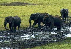 Elefanten IV