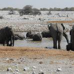 Elefanten können Genießer sein