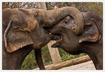 Elefanten-Kuss