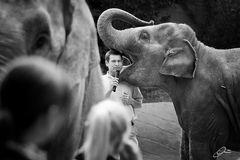Elefanten Kuß .....mit Zuge :-)