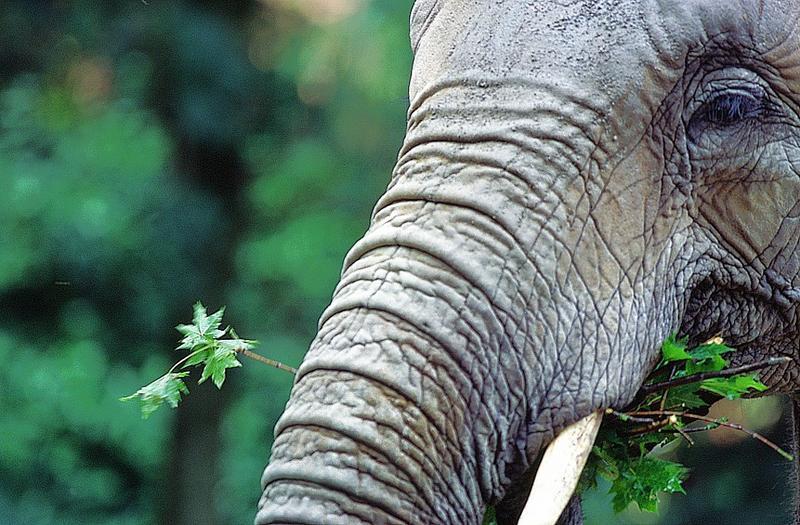 Elefanten Menue