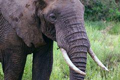 Elefanten-Portrait