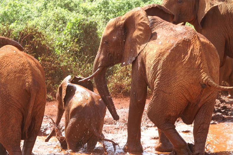 Elefanten Trek