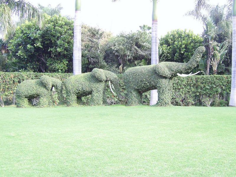 Elefanten vor dem Loro Parque auf Teneriffa