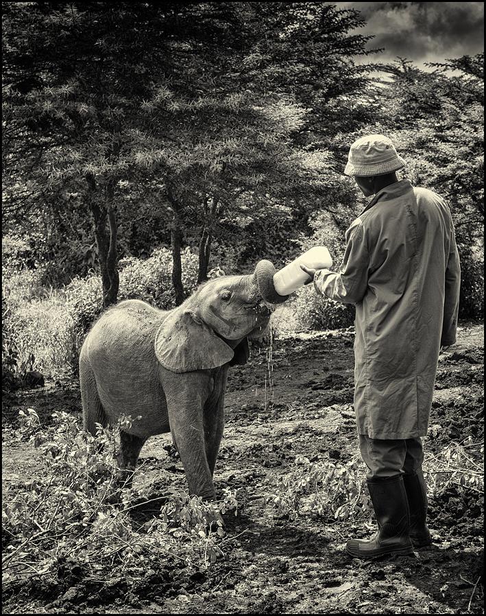 Elefanten-Waisen