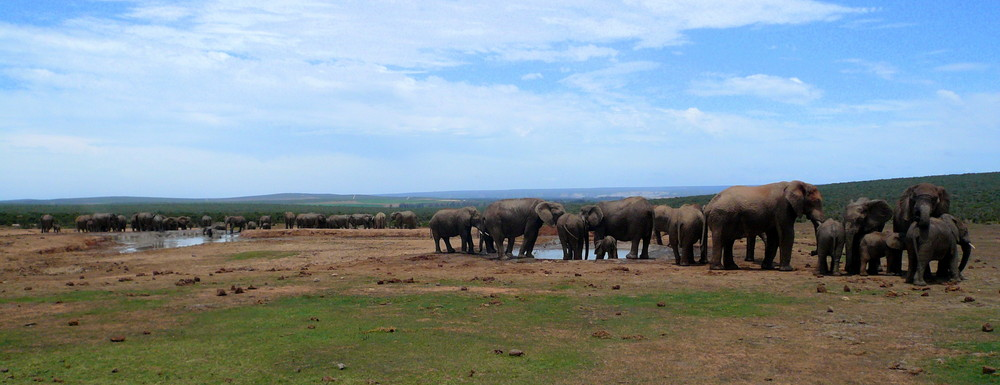 Elefantenauflauf