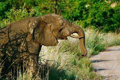 "Elefantenbaby als ""Anhalter"" am Wegesrand"