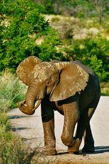 Elefantenbaby auf Wanderschaft