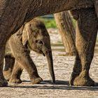 Elefantenbaby Thuza