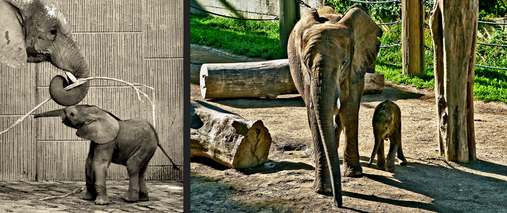 Elefantenbaby Tuluba entdeckt die Welt!
