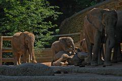 Elefantenbaby - wenn es schon nichts zu klettern gibt, reicht auch ein liegender Bruder