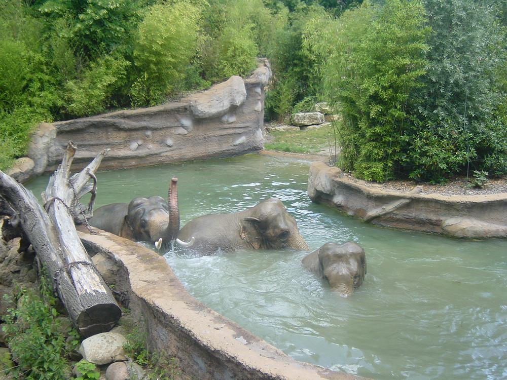 Elefantenbad im Leipziger Zoo