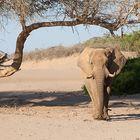 Elefantenbulle-im-Flussbett