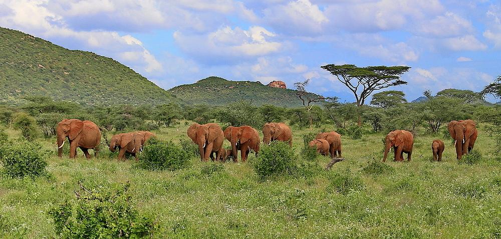 Elefantenfamilie auf dem Weg zum Wasserloch