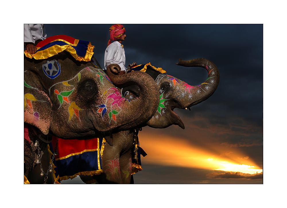 Elefantenfestival in Jaipur