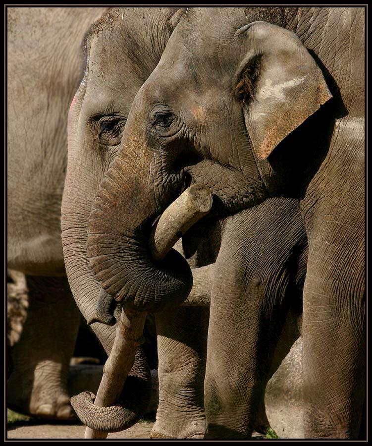 > Elefantenfreundinnen