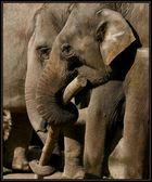 > Elefantenfreundinnen <