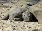 Elefantenfrieden