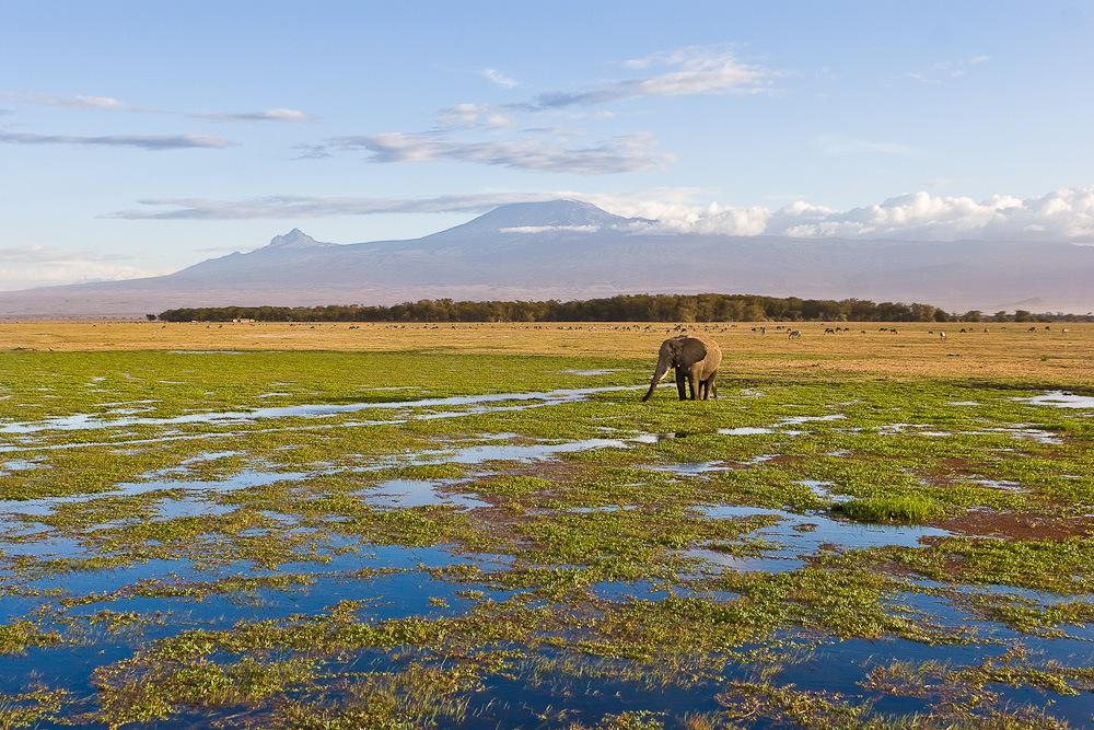 Elefantenfrühstück am Fuße des Kilimandscharo