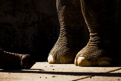 Elefantengehege...