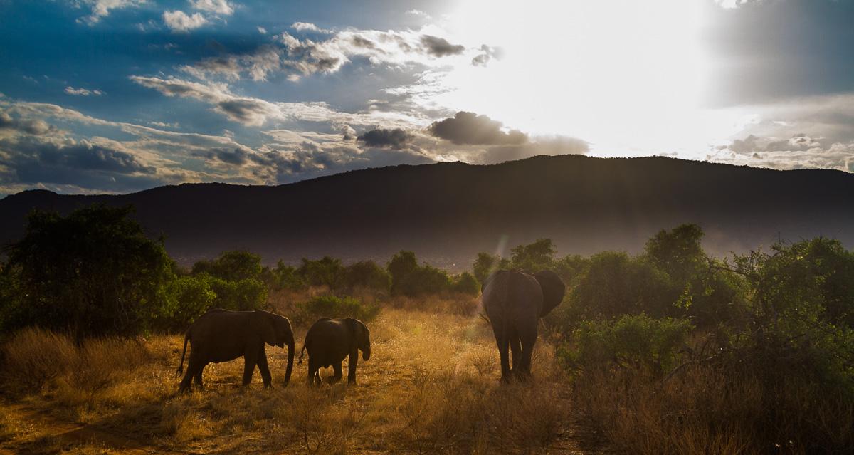 Elefantengruppe bei Sonnenuntergang
