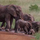 Elefantengruppe beim Schlammbad
