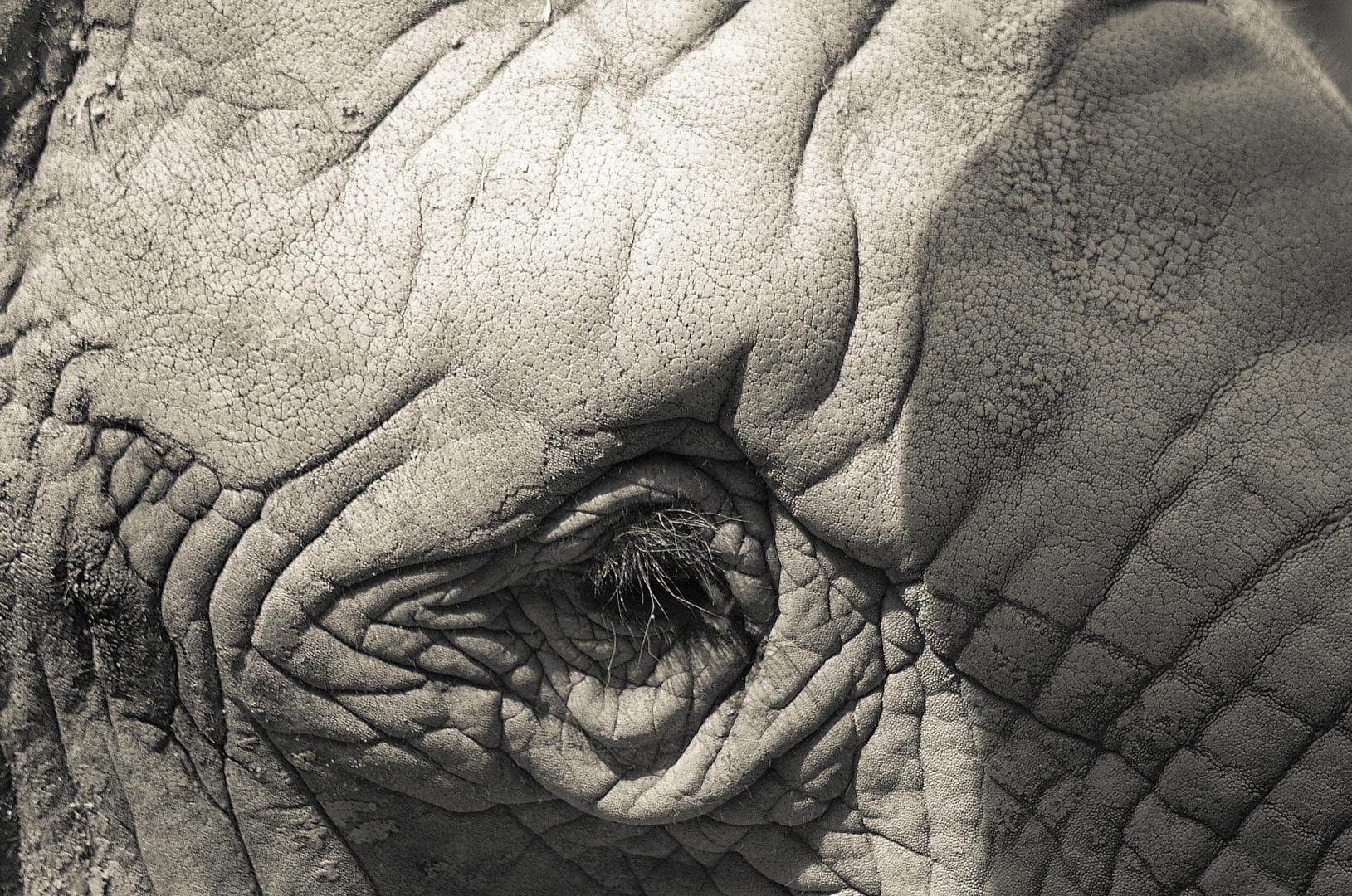 elefantenhaut foto bild tiere zoo wildpark falknerei s ugetiere bilder auf fotocommunity. Black Bedroom Furniture Sets. Home Design Ideas