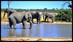 - Elefantenherde am Wasserloch.