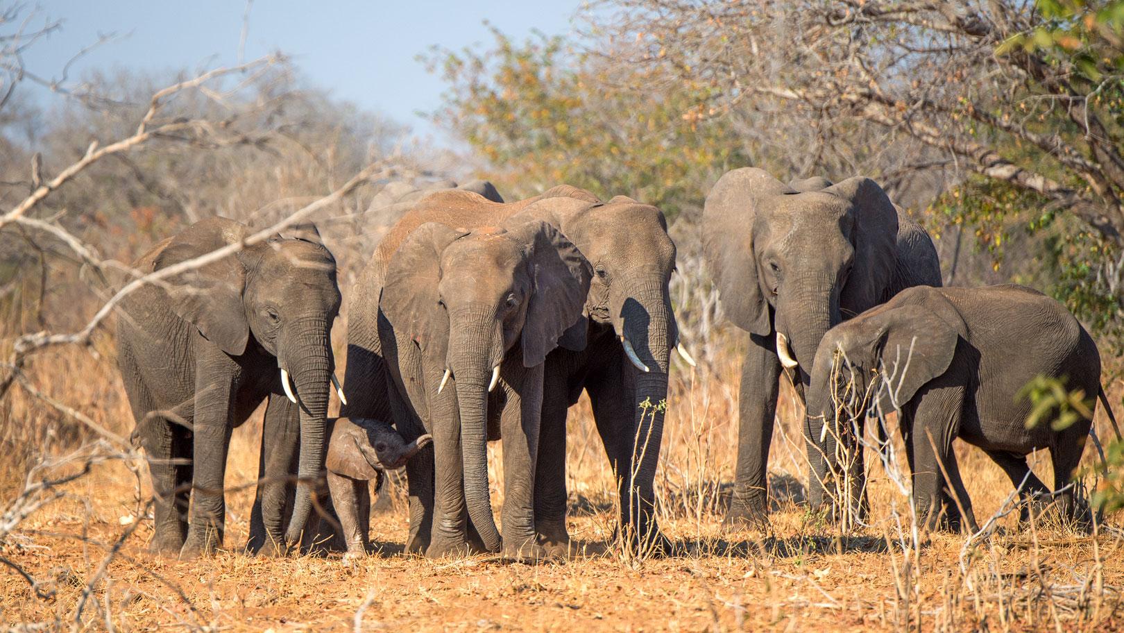 Elefanten ErdnГјГџe