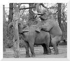 Elefantenhochzeit_3