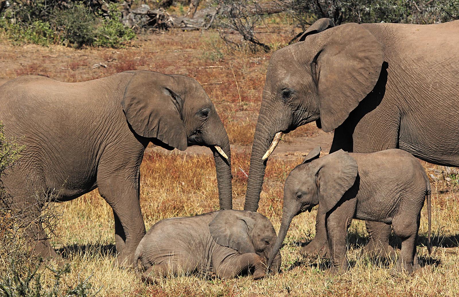 Elefantenidylle