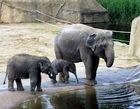 Elefantenkinder im Kölner Zoo