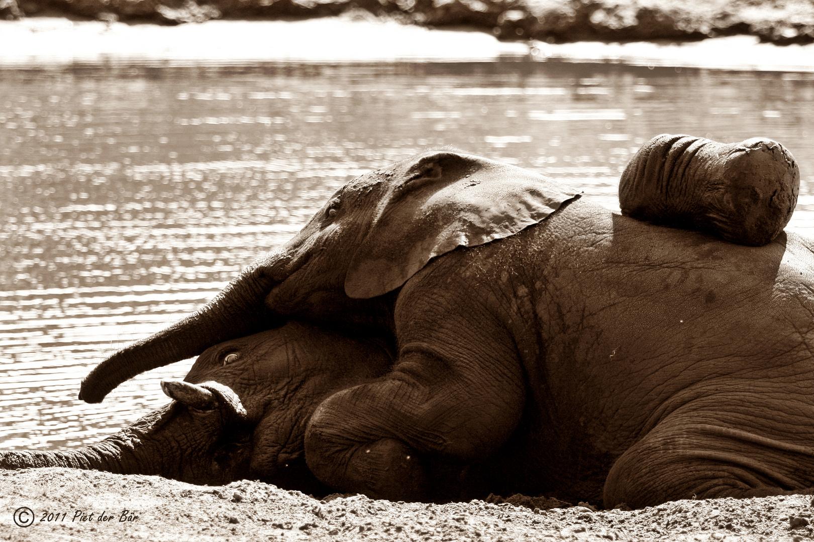"""""""Elefantenkuscheln"""""""