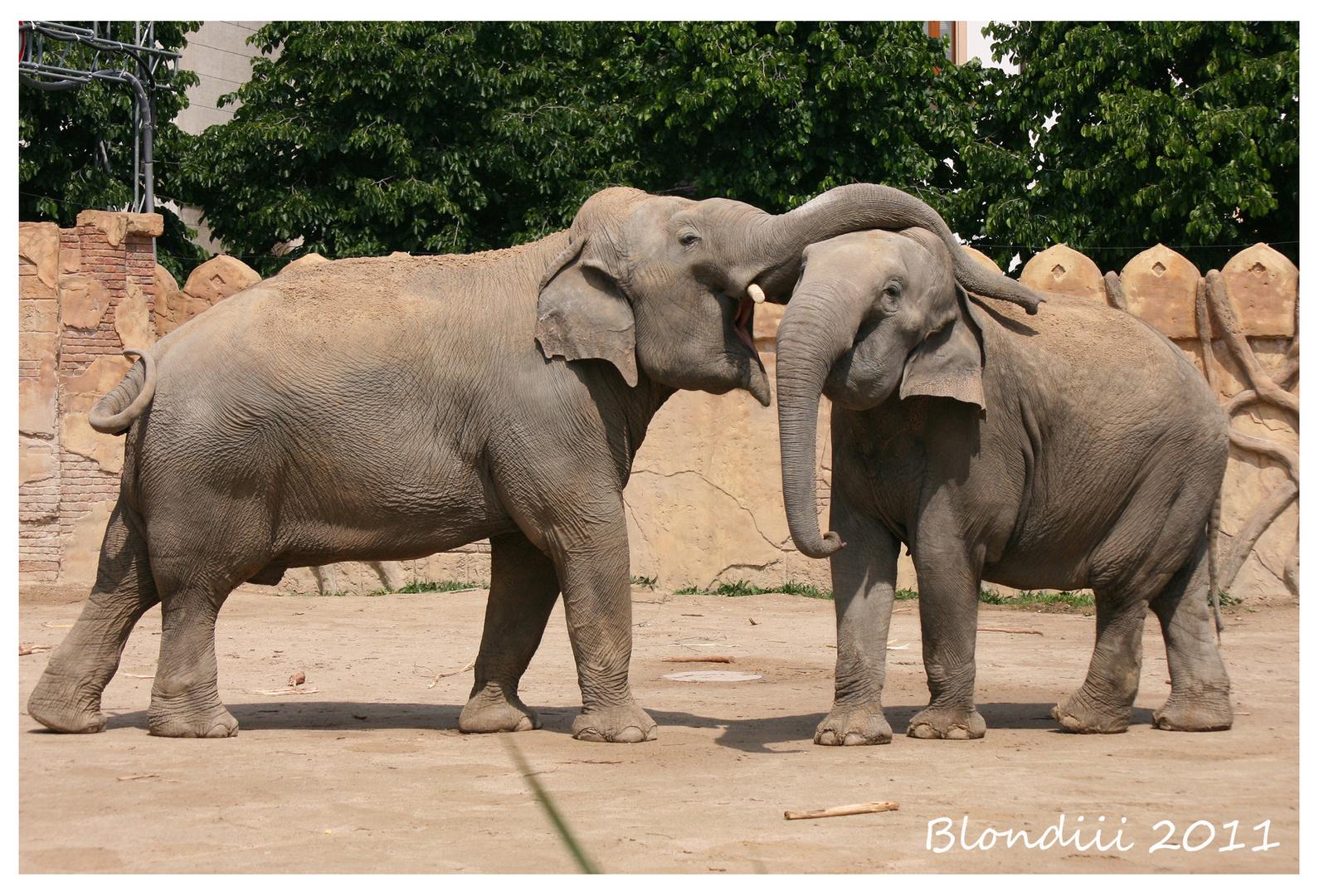Elefantenkuss