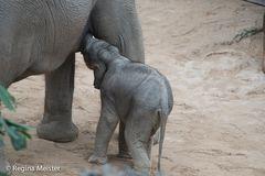 Elefantenmädchen Ruwani
