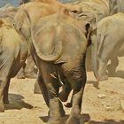 Elefantenpopo