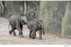 Elefantenrennen...