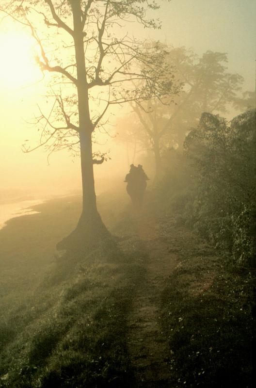 Elefantenritt im Morgennebel - reload