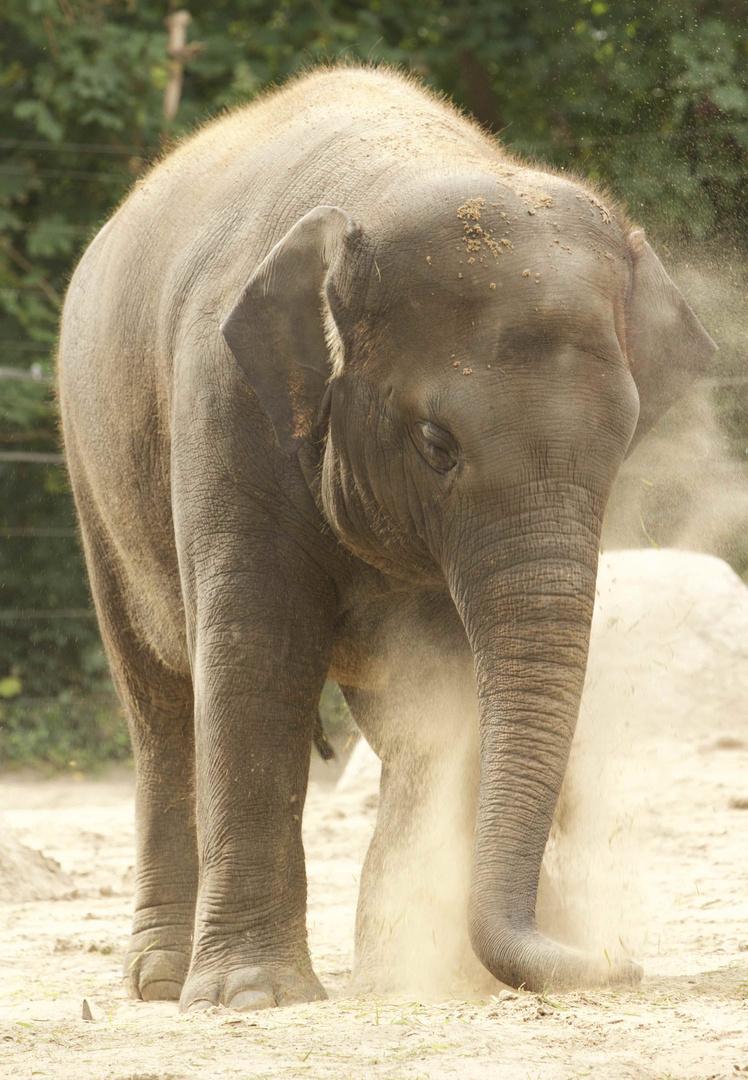 Elefantenspaß