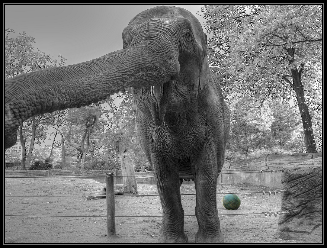 Elefantentalk