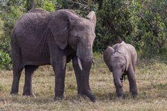 Elefantenunterricht