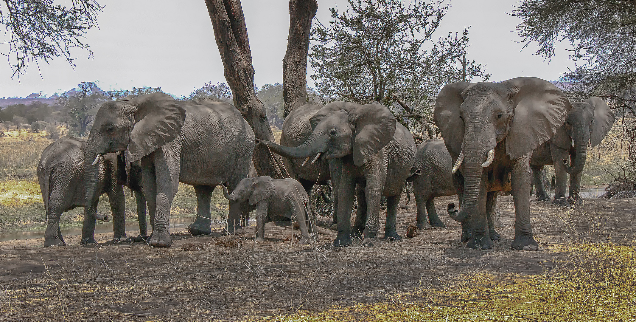 Elefantenwald