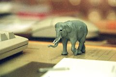 elefantenwanderung
