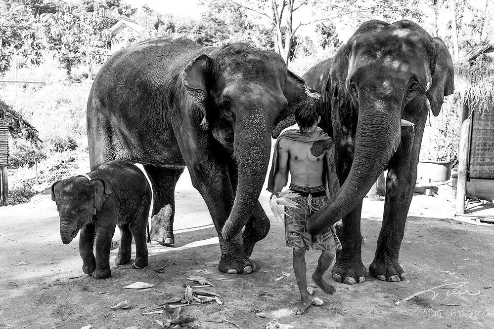 Elefantes con su mahout