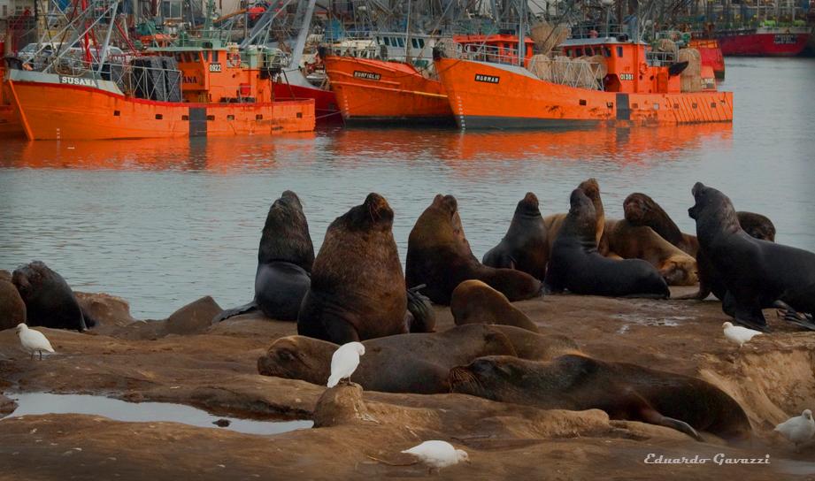 Elefantes en Mar del Plata