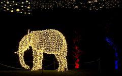 elefantös **