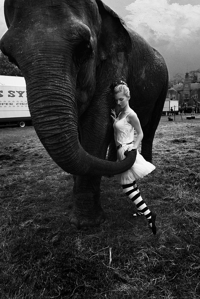 Elefantös.