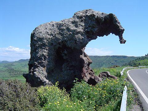Elefantös auf Sardinien