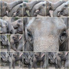Elefantöses oder Liebe in Rüsselsheim